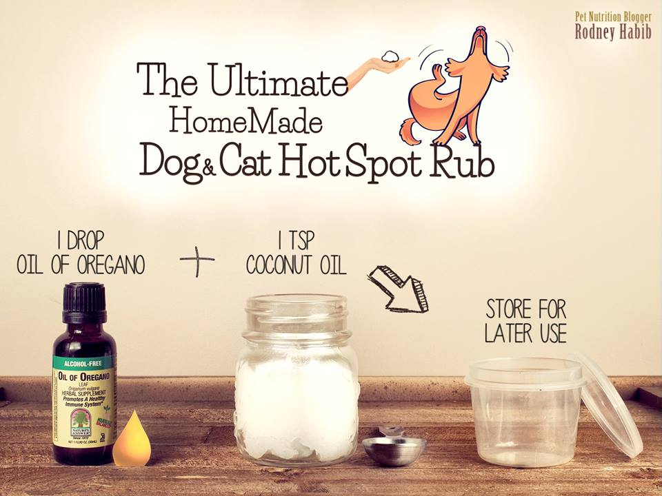 Homemade Hot Spot Relief For Dogs